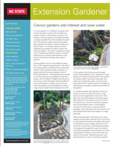 Cover photo for 2020 Winter Extension Gardener Newsletter Available Now!