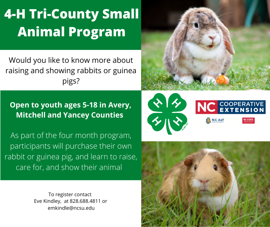 4-H Tri-County Small Animal Flyer