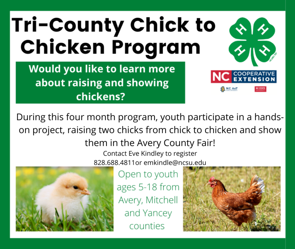 Revised Tri County Chick to Chicken Flyer