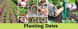 Planting Dates Picture