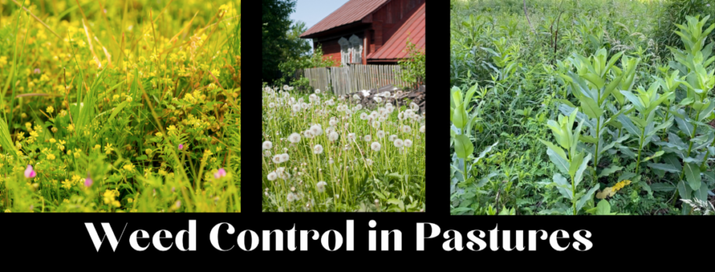 Weed Control in Pasture Photo