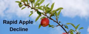 Rapid Apple Decline
