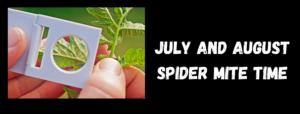 Spider Mite Title